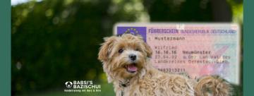 Hundeführerschein Titelbild